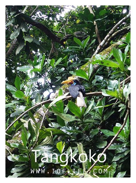 burung hutan tangkoko