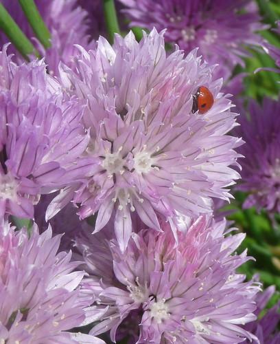 Note the ladybug