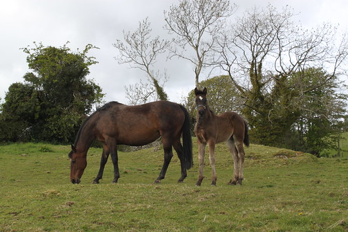 Molly and Foal of 8 weeks