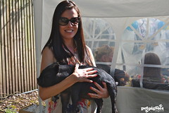 Petpiggies micro pigs enjoy a sunny afternoon with former Miss Great Britain