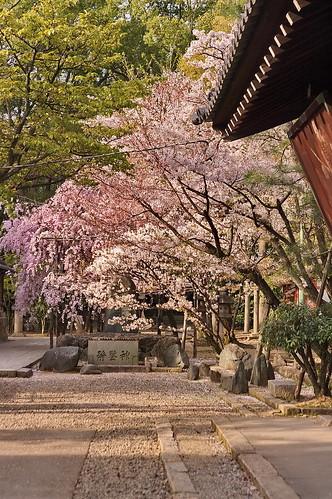 【写真】2013 桜 : 御香宮神社/2019-10-26/IMGP9751