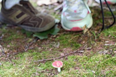 nature-hike-audubon-pa-4