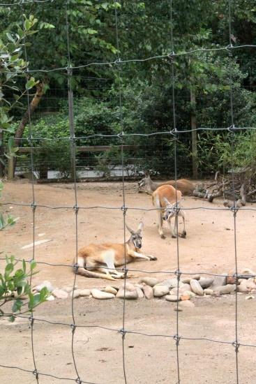 Atlanta Zoo '13, 15