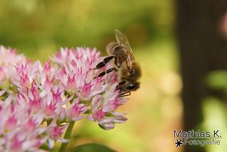 Von Bienchen und Blüten