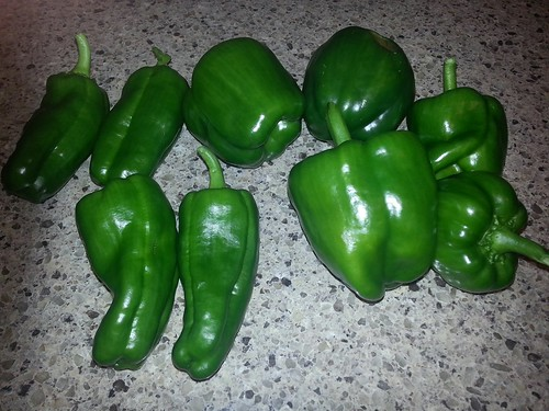 pepper harvest july 2013