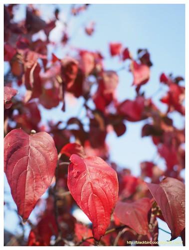 Autumn dayn #01