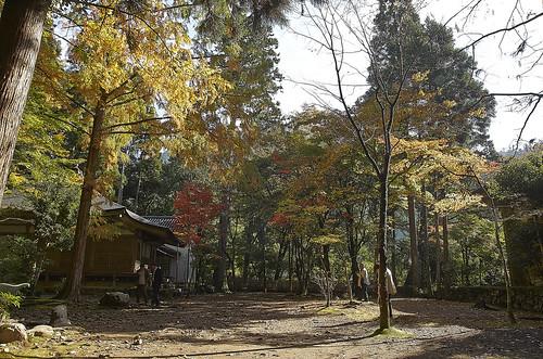 【写真】紅葉 : 高山寺