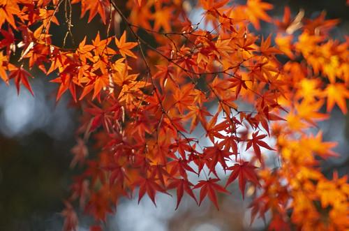【写真】2013 紅葉 : 上御霊神社/2020-07-01/IMGP4191