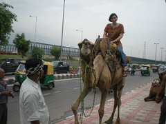 The Highway Camel