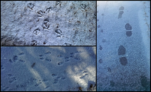 2:365:2014 Footprints Triptych
