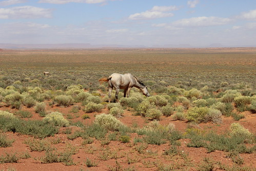 IMG_2796_Free_Range_Horses_Near_Monument_Valley