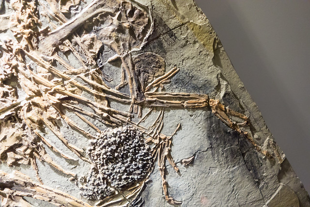 Feathered Dinosaur Plate
