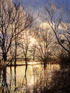 Water, Trees & Sunshine