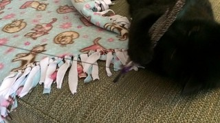 Bird Catcher Pro by Pets Can Play product review