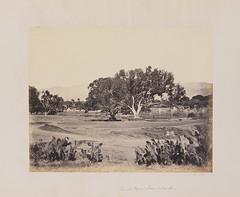 Sacred Pepul Tree & Tank.