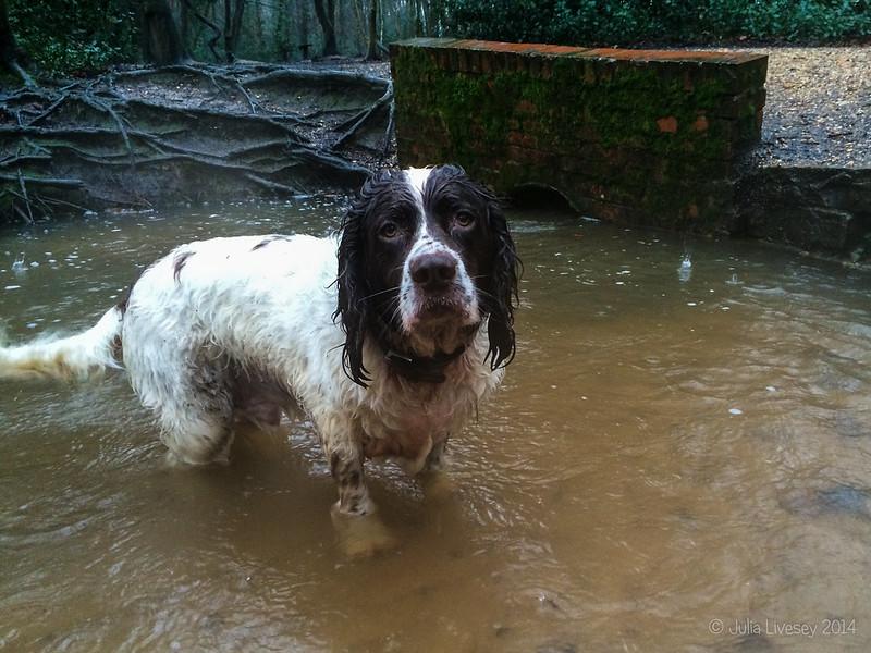 Max in a very swollen stream