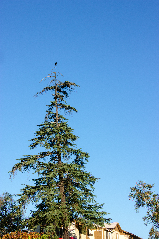 tree_3_web