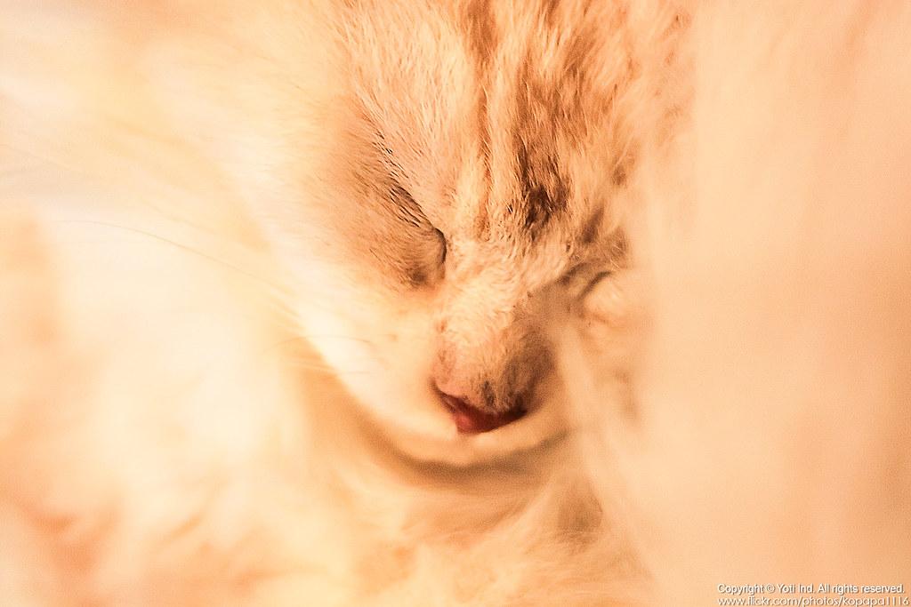 元氣貓主題餐廳 IMG_6124