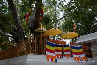 Sri Lanka. Anuradhapura. Sri Maha Bodhi.