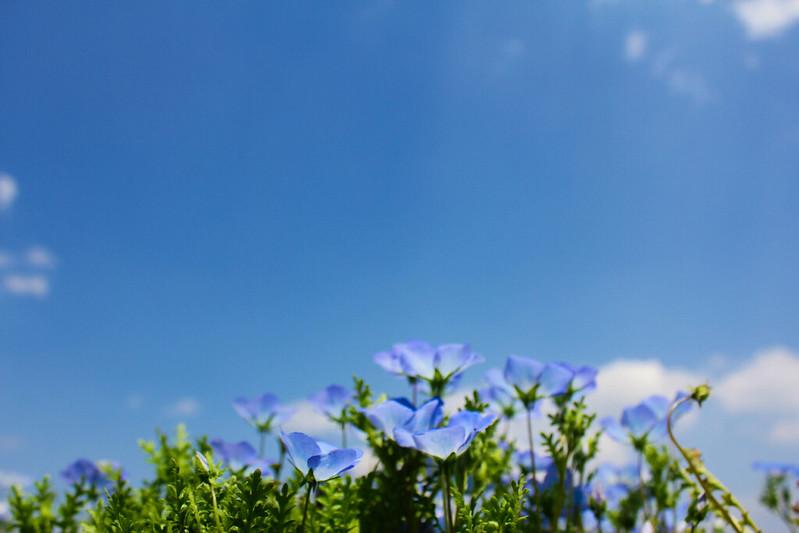 2014-05-04_00928_九州登山旅行.jpg