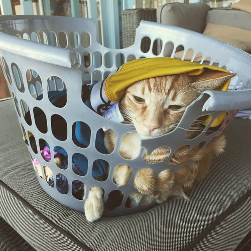 This basket case loves to lie in a basket full of wet washing fresh out of the machine