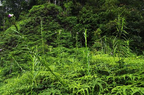 vacation forest nationalpark december january deep reserve sri lanka srilanka ceylon sinharaja sinharajaforestreserve