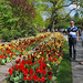 Keukenhof Gardens, The Netherlands by Gerry van Gent