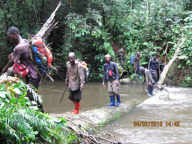 crossing a stream on elephant census_2016