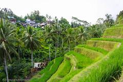 Bali / Indonesien - Reise 2016