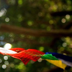 Prayer flags in a bamboo forest in Puerto Rico. #ProjectYoga #nofilter