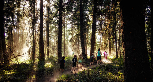 trees light wild forest running olympus canoe panasonic trail dust soles omd shuswap 14mm em5