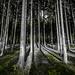 Es grünt der Wald by Gruenewiese86