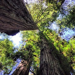 Redwoods was magical. Exceeded expectations.