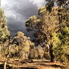 Ominous outlook on the Yarra Trails this arvo. Grouse to get muddy again on the way home!