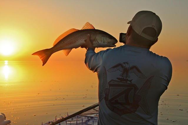 Redfish in the sunse