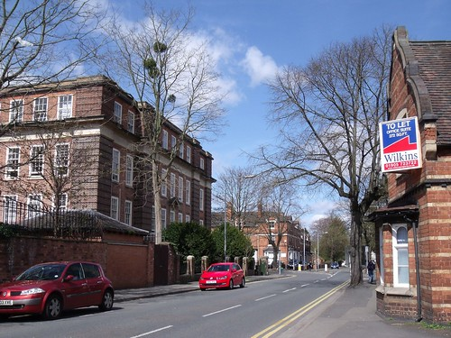 05 Mistletoe in Worcester city centre 04-13