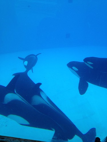 Sea World Shamu