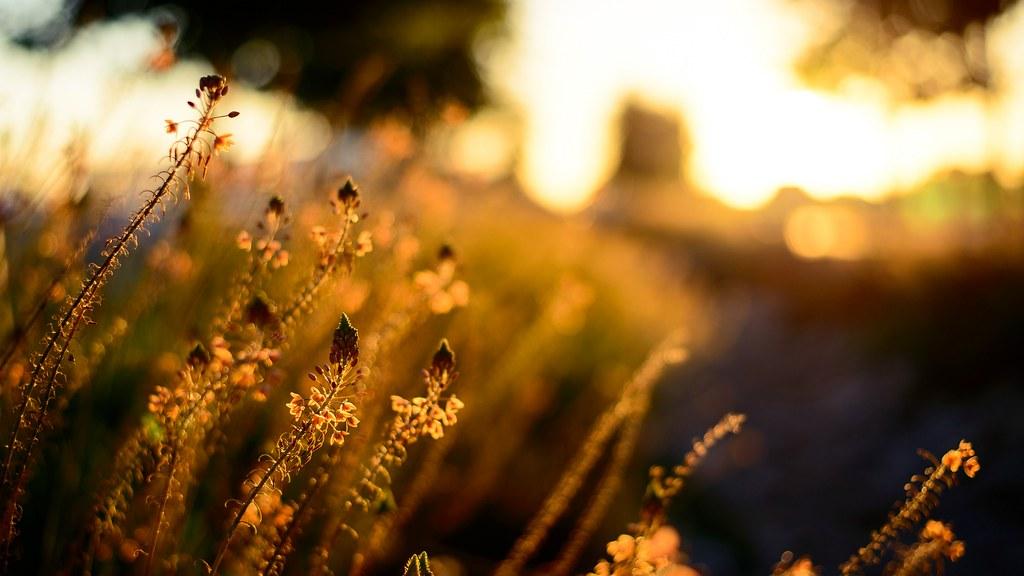 Lo maravilloso de la naturaleza