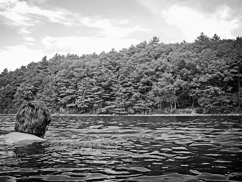 Swimming Across Walden