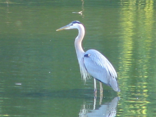 Heron on the Solstice