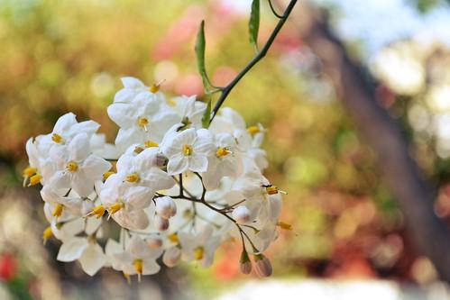 La flor de mi jardín by 365Pinkphotos
