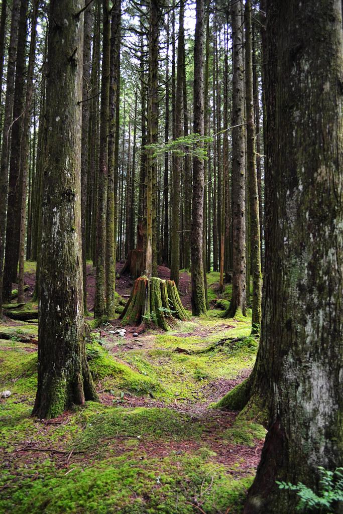 Tree Walk