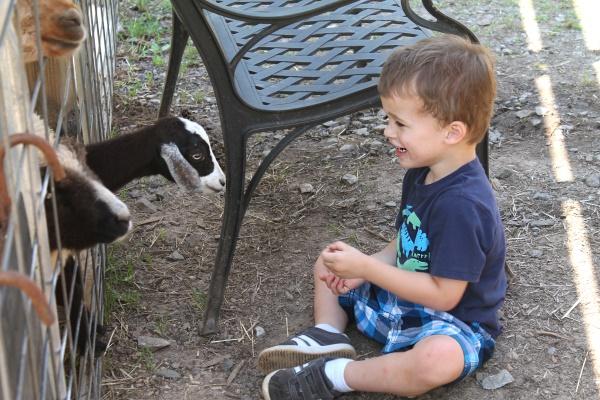 Petting Zoo, 13