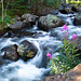 Mountain Stream - RMNP by bigvern