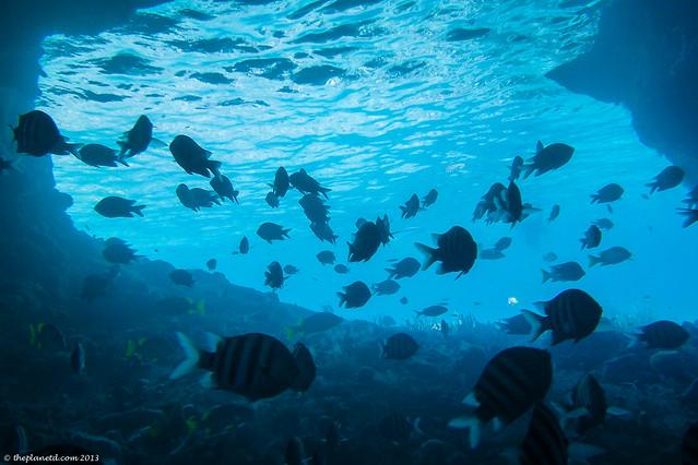Thunderball Grotter fish