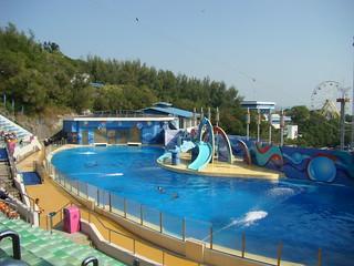 042 Dolfijnenshow