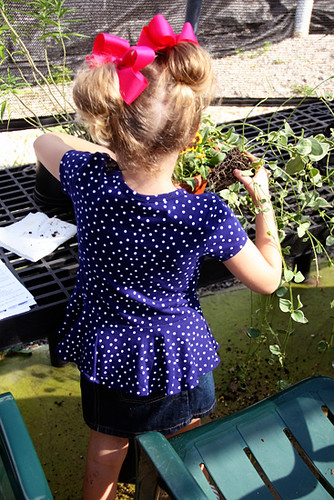 Putting-flowers-in-pot_Aut