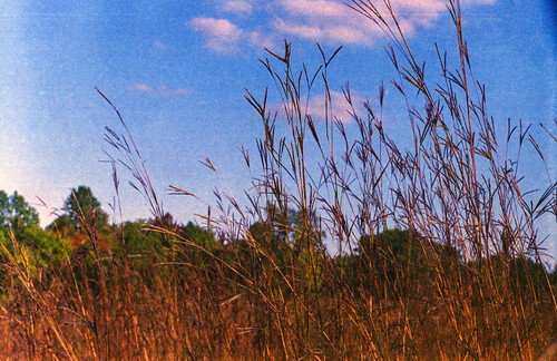 Tall Grass and Blue Skies