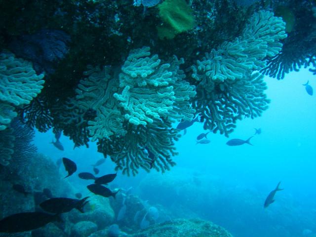 Mergulho em La Bufadora, Cabo San Lucas