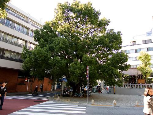 otyanomizu-2013119_ 11